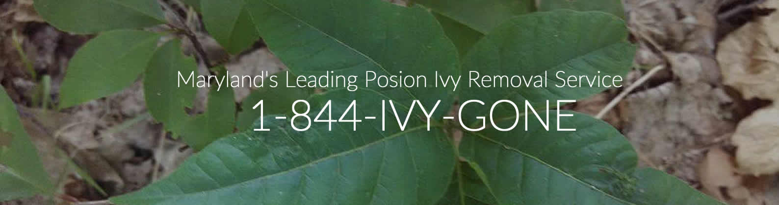 Poison Ivy Removal service in Baltimore Maryland