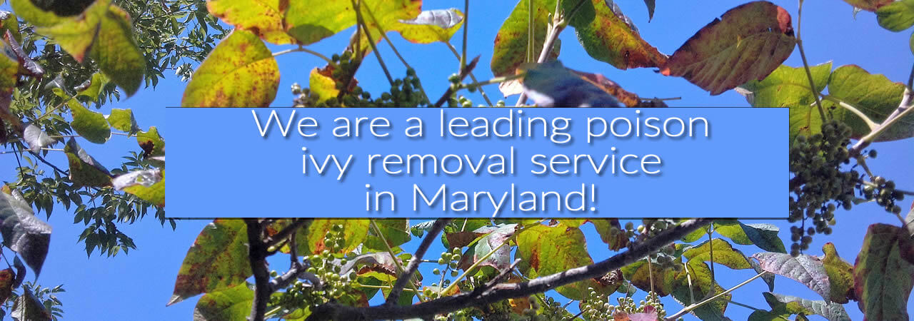 Poison Ivy Removal service Maryland, Washington DC, Baltimore
